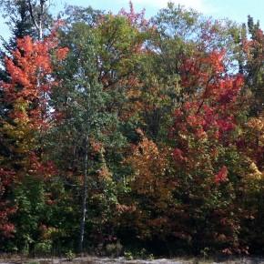 Adirondack musings