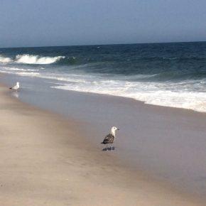 World Oceans Day: How I Do Love Oceans!