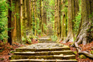 Try Forest Bathing