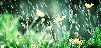 nourishing rain